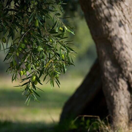 Ein Stück Italien mit Olivenholz Parkett
